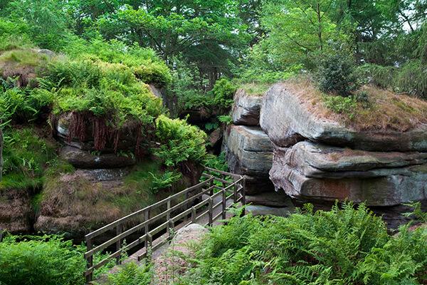 Woodland Walk Rocks
