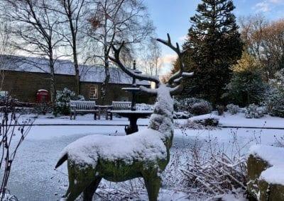 A snowy Stag