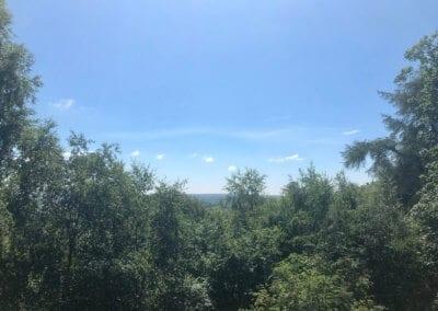 Views across the treetops