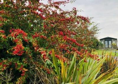 Autumn Rowans 2